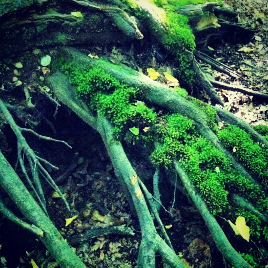 Moss covered roots; a little carpet of colour