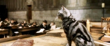 McGonagall might be an animagus, but her cat never talks.